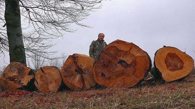 Să respiri lângă bătrânii arbori